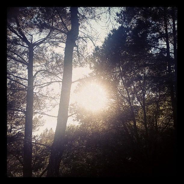 lighttrees